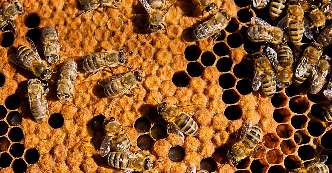 inline_beehive